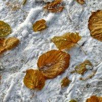 Последние листья & первый снег :: Дмитрий Рогожин