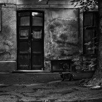 Двор :: Александр Тарасенко