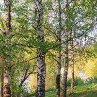 Подмосковная весна :: Олег Неугодников