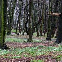 Когда деревья были большими… :: Юрий. Шмаков