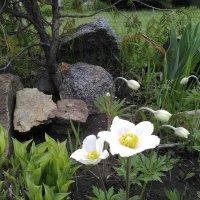 Белые цветы :: Анатолий