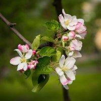 Весна. :: Лия Таракина