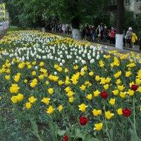 Ах, дети цветы жизни! :: Ольга Кривых