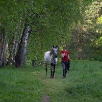 Выгул лошадки :: Валерий Самородов