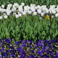 Цветы, цветы. :: Ирина Лебедева