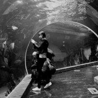 загадки подводного мира :: Михаил Зобов