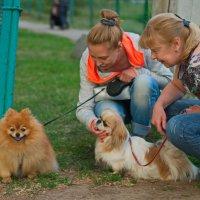 Собака-улыбака :: Валентина M