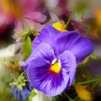 Цветы ... :: Анна Приходько