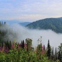 Туман навстречу :: Сергей Чиняев