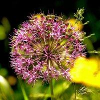 майское цветение 1 :: Александр Прокудин