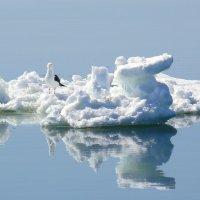 mini iceberg :: PorshE