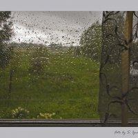 А, дождь идет...... :: Сергей Израилев
