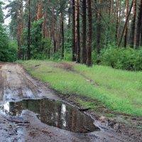 Дождём последним май пролился... :: Лесо-Вед (Баранов)