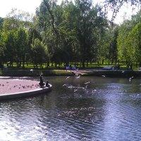 В Таврическом саду. (С-Петербург, июнь 2017 г.). :: Светлана Калмыкова