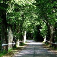 Природный тоннель.. :: Антонина Гугаева