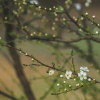 Весенний лес :: Анна Удалова