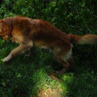 Кое-что из жизни собачьей (но из хорошей жизни) :: Андрей Лукьянов