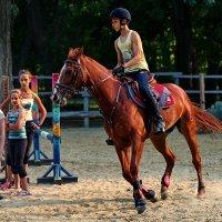 Красный конь :: Анатолий Шулков