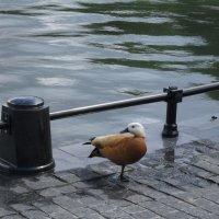 Холодный день на Останкинском пруду. :: Надежда