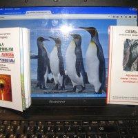 Политический юмор: Инструктаж российских пингвинов!... :: Алекс Аро Аро