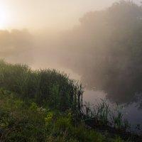Солнечный свет пробился сквозь туман :: Сергей Корнев