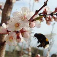 Заманчивое цветение :: Стас Борискин