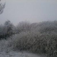 Зимние кусты. :: Daniel Surov