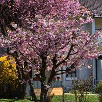 Весна в доме ... :: Владимир Икомацких