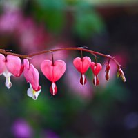 hearts :: PorshE