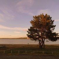 Одинокое дерево. :: Мила Бовкун