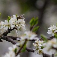 Весна :: Oleg Tumakov