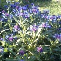 Mėlynas vakaras / Blue evening :: silvestras gaiziunas