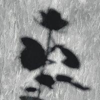 И у цветов есть душа..... :: Kliwo