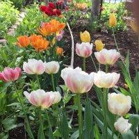 Пора цветения :: Наталья Маркелова