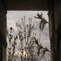 Природа в рамке :: Татьяна Шторм