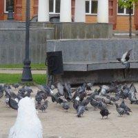 голуби :: константин Чесноков