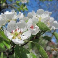 весна :: Марьяна