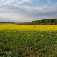 Весенний пейзаж :: Вера (makivera)