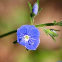 Про красоту цветочную.. :: Андрей Заломленков