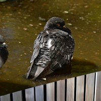 отмокаем :: linnud