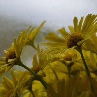 желтые цветы :: Katerina Sheglova