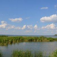 Озеро Горькое. Алтайский край. :: Olesya