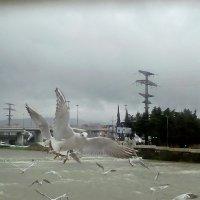Чайки в полете :: Елена