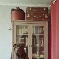 Портрет шарпея в интерьере :: Тата Казакова