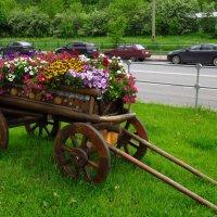 Целый воз цветов :: Андрей Лукьянов