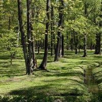 лесной ручей :: elena manas