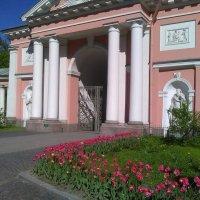 Цветы у Казачьего собора. (Июнь, Санкт-Петербург). :: Светлана Калмыкова