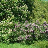 Пора цветения... :: марина ковшова