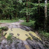 После дождей. :: Владимир Безбородов
