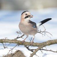 Вспоминая о зиме. :: Светлана Ивановна Медведева